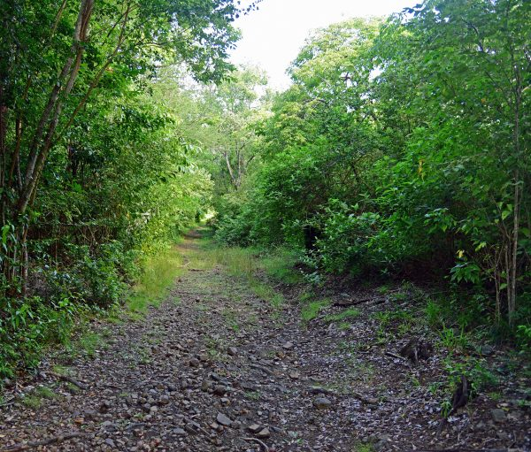 Auf dem Weg zum Piton Crève-Coeur in Martinique