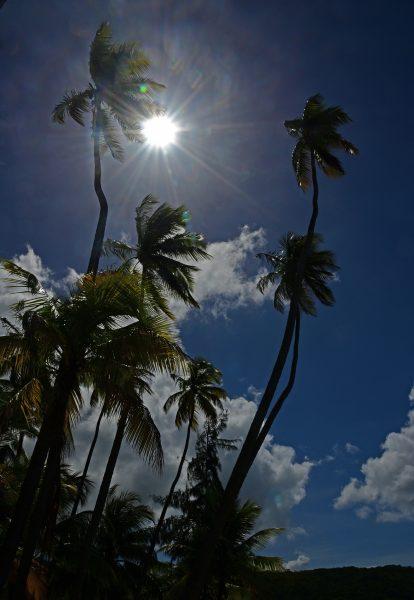 Mittags um Elf in Martinique