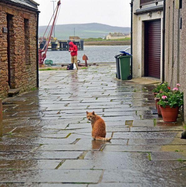Meine neue Freundin auf Stromness, Orkney Inseln, Schottland
