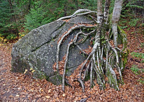 Im Nationalpark von Saguenay