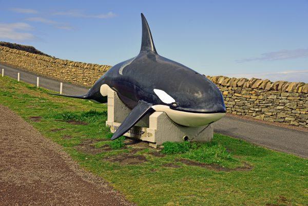 Sumburgh Head Cliff Besucherzentrum, Shetland, Schottland