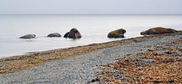 Poolepynten, Spitzbergen