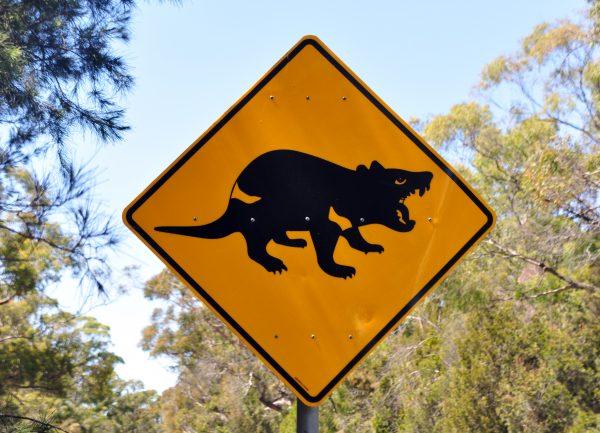 Vorsicht vor dem Tasmanischen Teufel