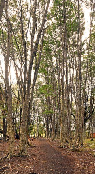 Ein Wald im Nationalpark Tierra del Fuego