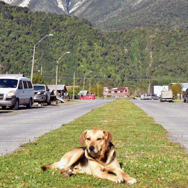 Ein Hundi in Chaitén