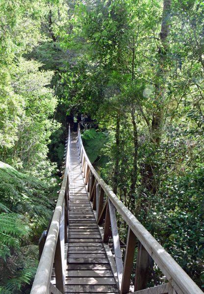 Eine Hängebrücke im Pumalin Douglas Tompkins National Park