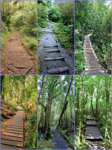 Wanderpfade im Pumalin Douglas Tompkins National Park