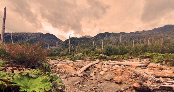 Abgestorbene Bäume im Pumalin Douglas Tompkins National Park