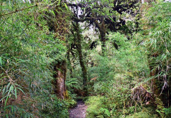 Ein Wanderpfad im Pumalin Douglas Tompkins National Park
