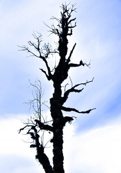 Apocalypse Now im Pumalin Douglas Tompkins National Park