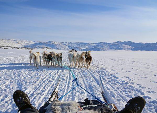 Hundeschlittenfahrt in Ilulissat