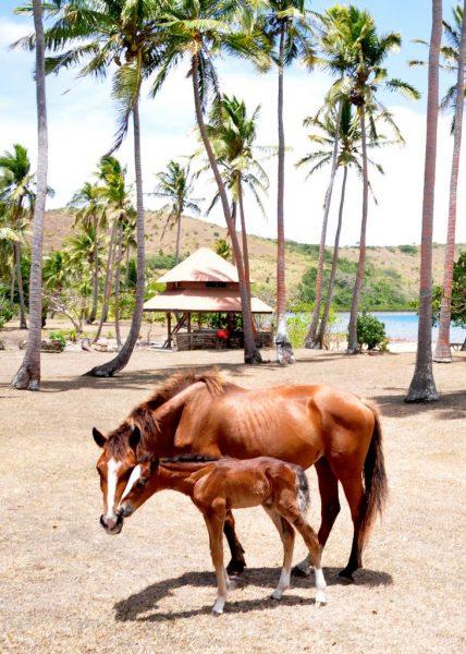 Auf der Insel Nananu-i-Ra