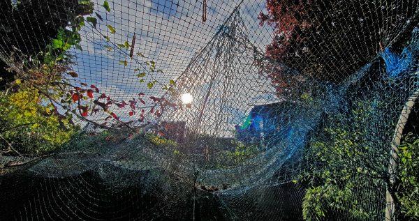 Gefangen im Corona-Netz