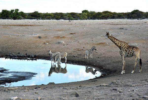 Ein Wasserloch im Etosha Nationalpark