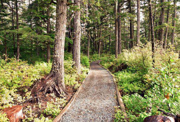 In den Wäldern von Haines