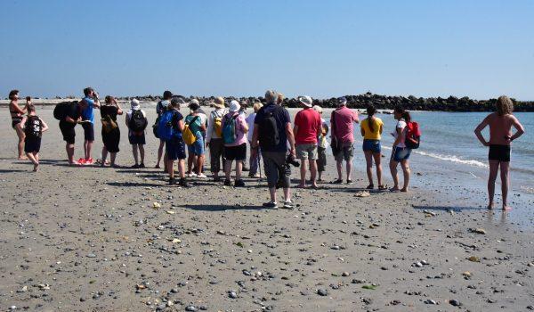 Seehund-Beobachtungen vor Helgoland