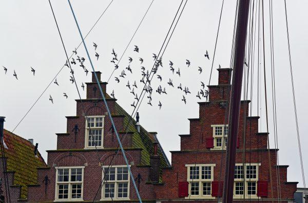 Vögel in Hoorn