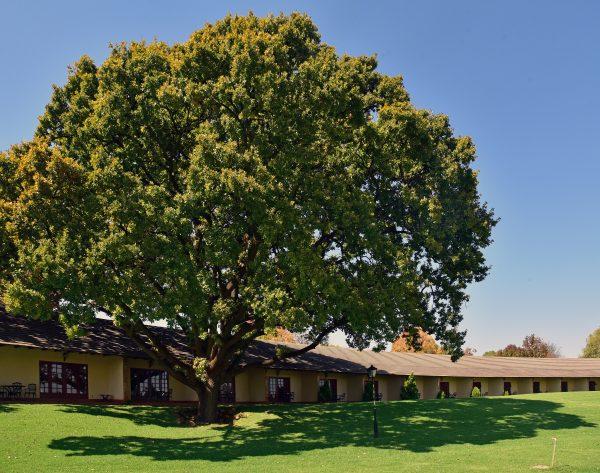 Die 'African Pride Irene Country Lodge'