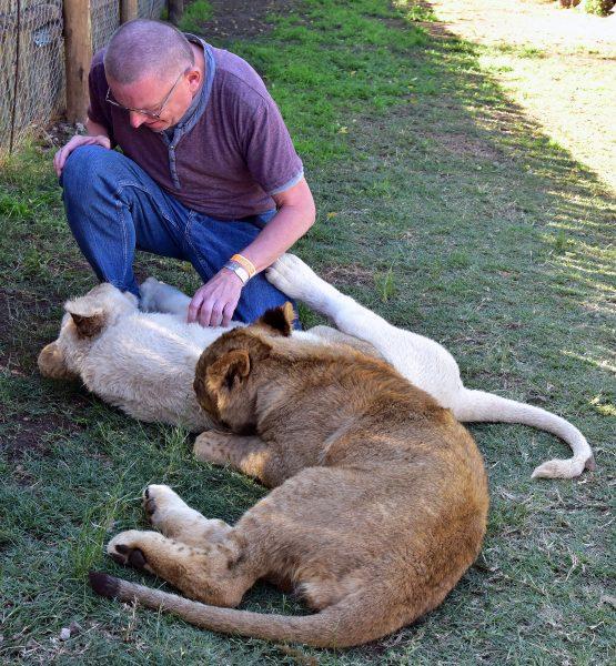 Der Löwenbiss