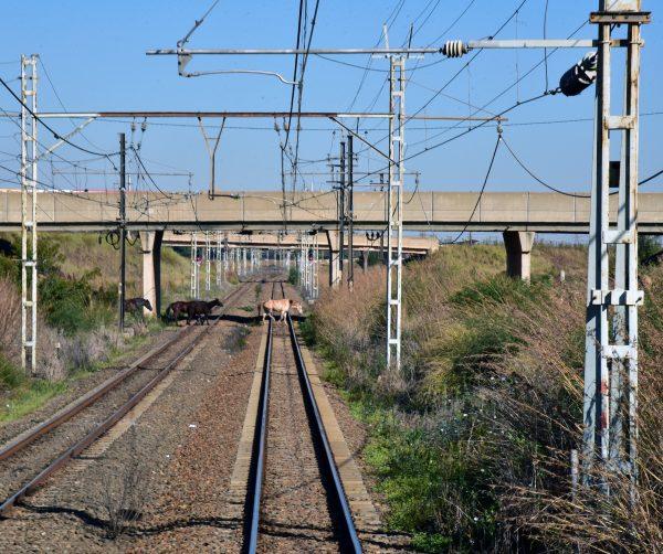 Das Betreten der Gleise ist verboten