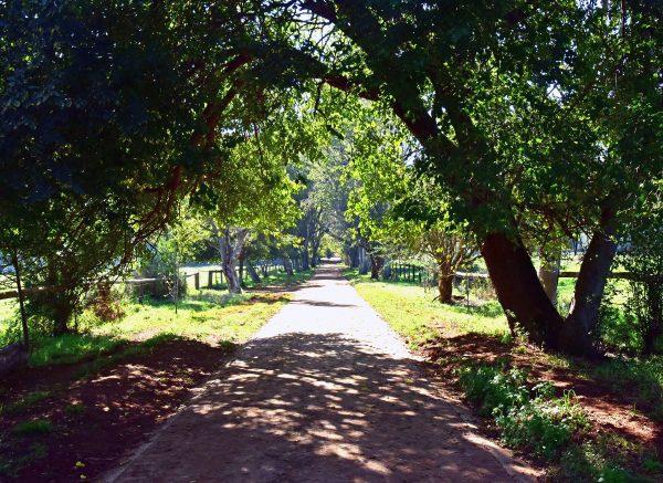 Spazieren gehen in der 'African Pride Irene Country Lodge'