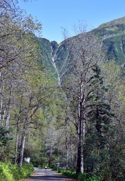 In den Bergen von Juneau