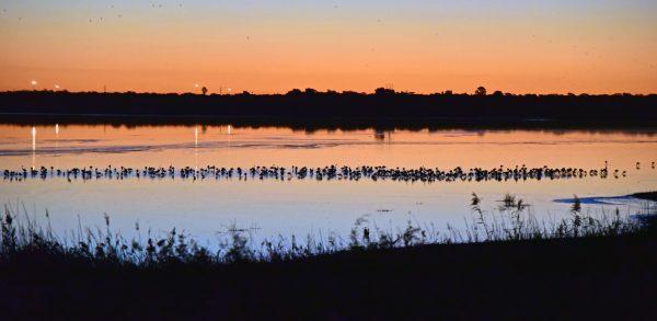 Flamingos am Kamfers Dam