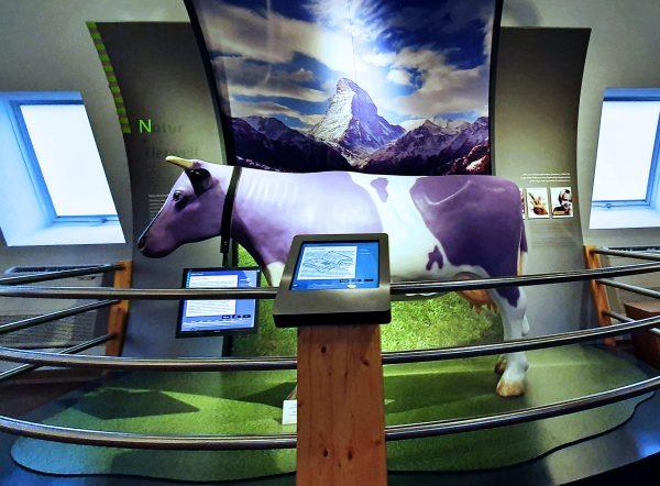 Die Milka Kuh im Schokoladen-Museum von Köln