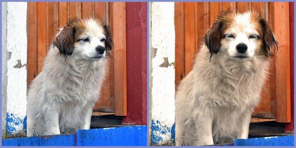 Ein Hundi in Puerto Edén