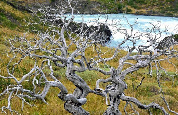 Folgen eines Waldbrandes am Wasserfall 'Salto Grande' im Torres del Paine Nationalpark