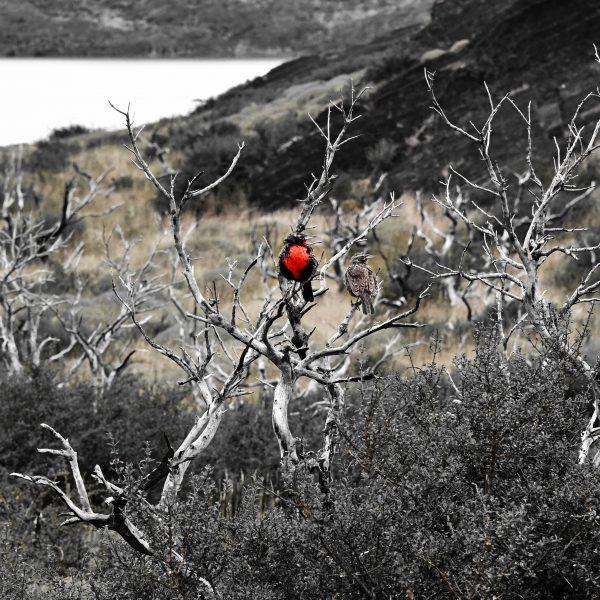 Folgen eines Waldbrandes im Torres del Paine Nationalpark