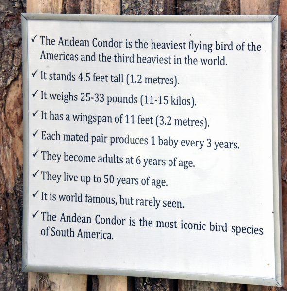 Viele Infos zu Kondore