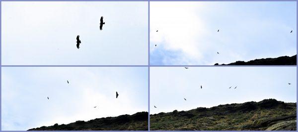 Kondore in Chile