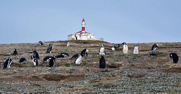 Pinguine und der Leuchtturm auf der Insel Magdalena