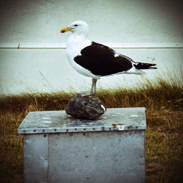 Das Denkmal 'El Pájaro Vivo', Insel Magdalena