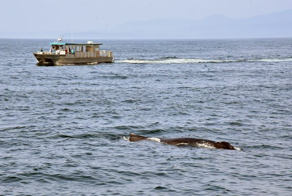 Wal in der Southeast Island Passage