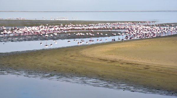 Flamingos nahe Swakopmund
