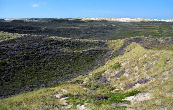 Panoramablick auf die Wanderdünen auf Sylt