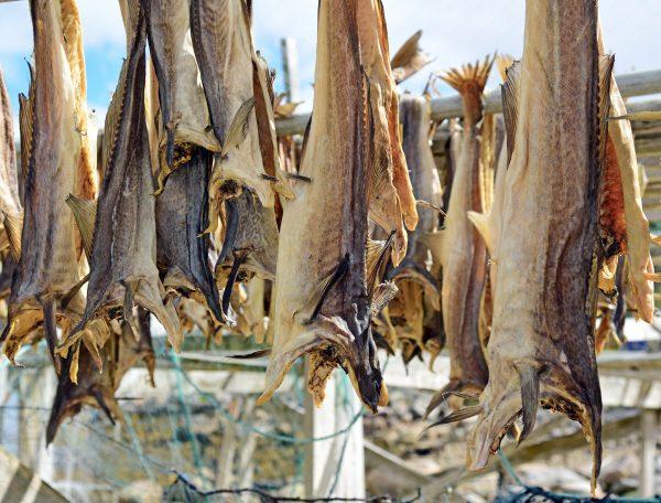 Getrockneter Stockfisch in Norwegen