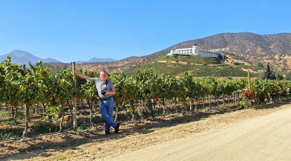Zinni und der Indomita Vineyard / Casablanca Valley