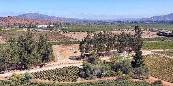 Blick auf die Weinberge / Indomita Vineyard / Casablanca Valley