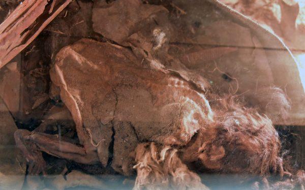 Ein Embryo in Julios Museum in Casablanca