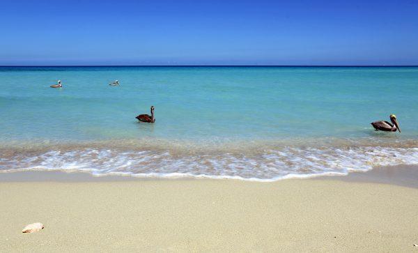 Der Strand bei der 'La Casa De Al' in Varadero